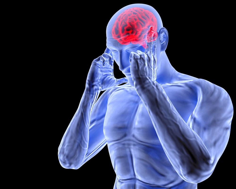 Les effets de la musculation sur le cerveau