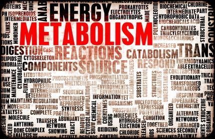 Le métabolisme pour les nuls