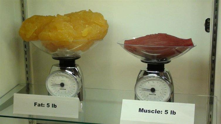 Perte de poids ou perte de graisse ?