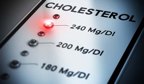 Le cholestérol et la construction musculaire