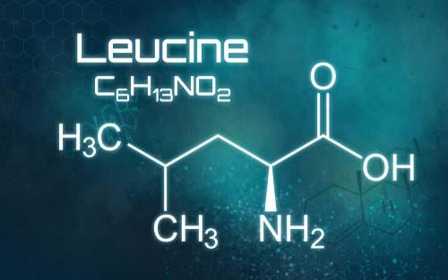 Les acides aminés essentiels à la loupe