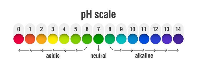 Le pH sanguin