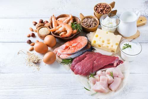 Les différentes sources de protéines