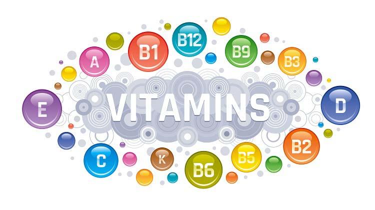 Le rôle des vitamines