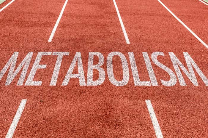 Le métabolisme en musculation