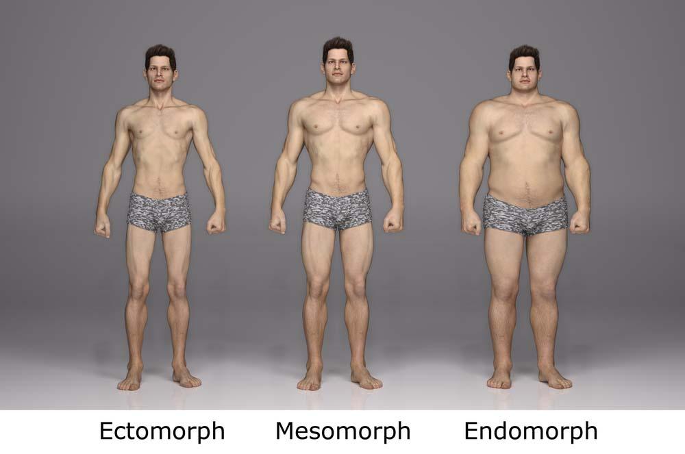 Morphotype et prise de masse