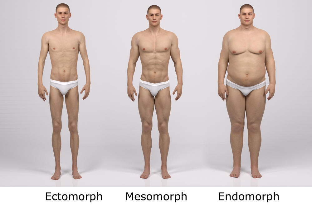 Les morphotypes en musculation
