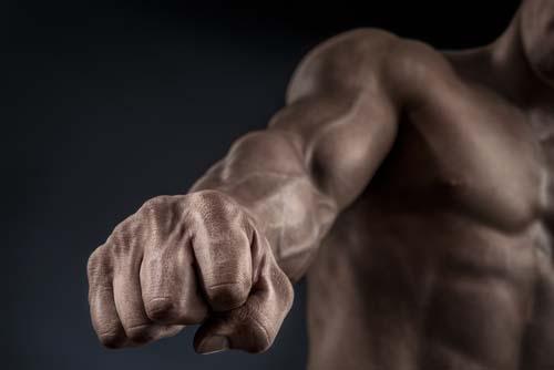 Masse musculaire et longévité