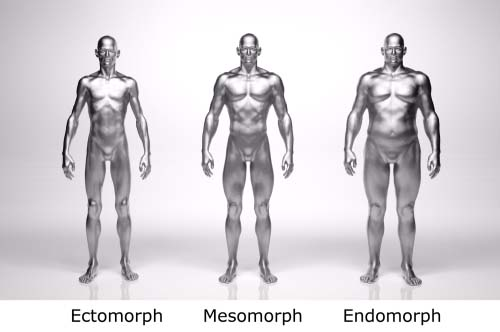 Musculation et morphotypes