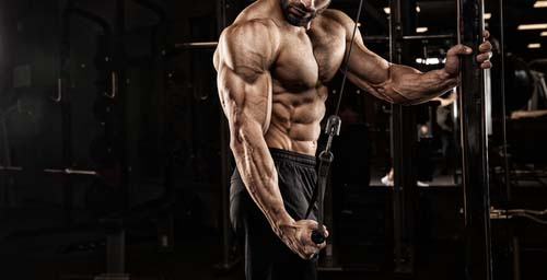 Nutrition post entraînement construction musculaire