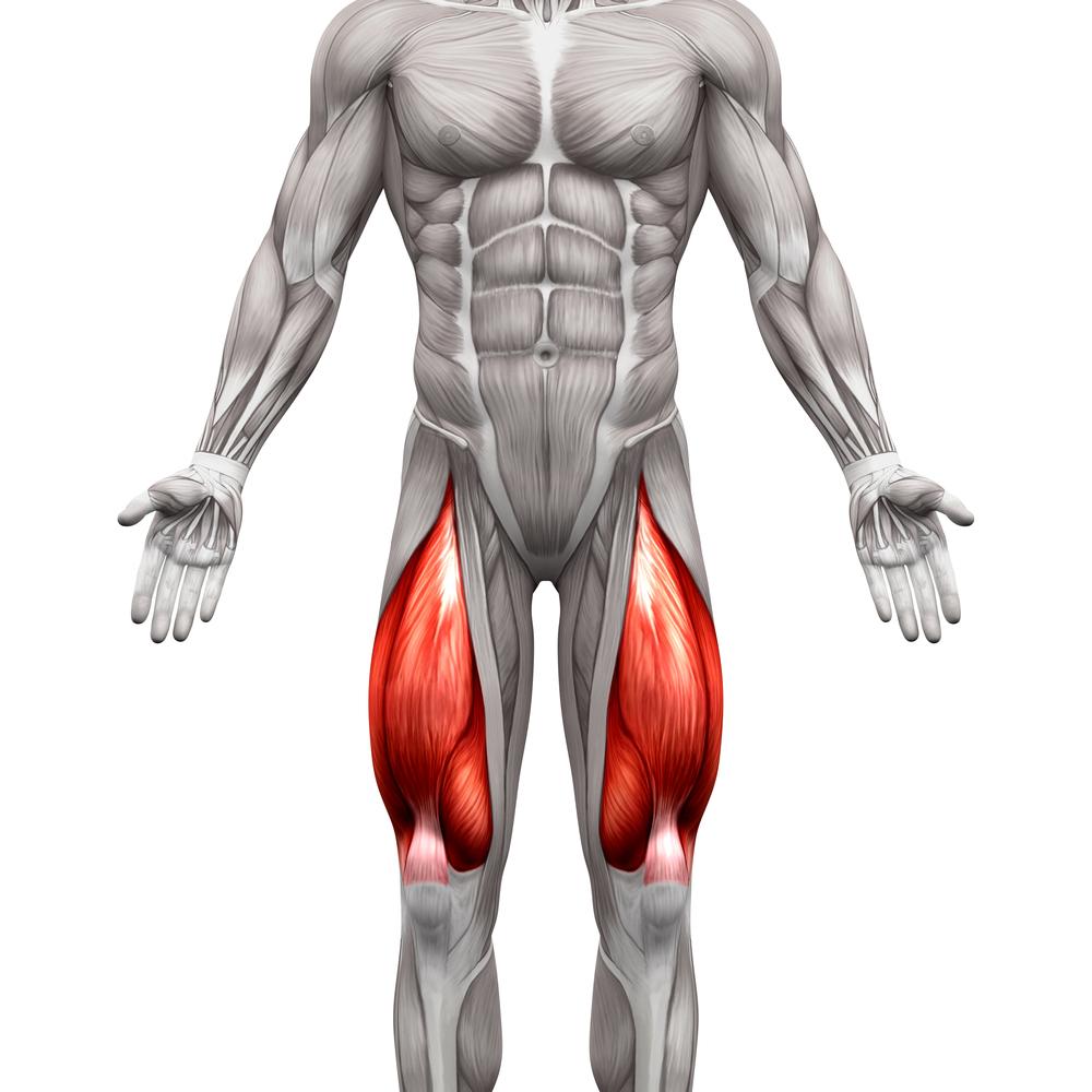 Les quadriceps programme