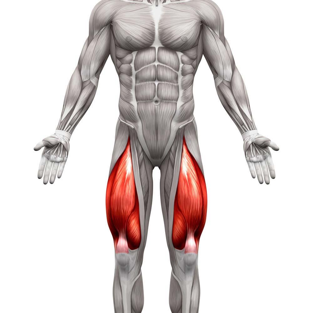 Anatomie quadriceps femmes