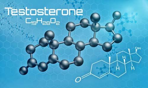 Qu'est-ce que le testostérone?