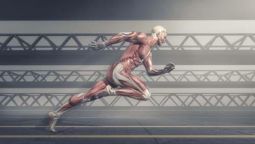La musculation améliore la mobilité