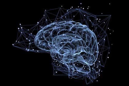 La musculation améliore les capacités cérébrales