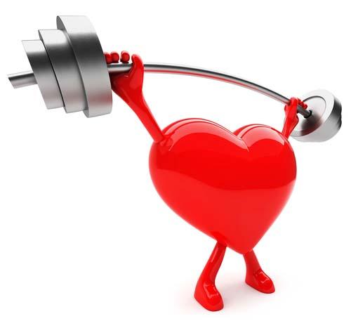 La musculation renforce le coeur