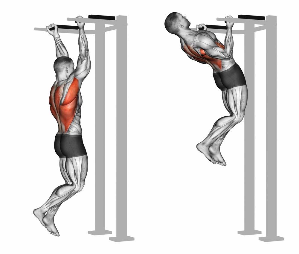 Tractions prise inversée biceps