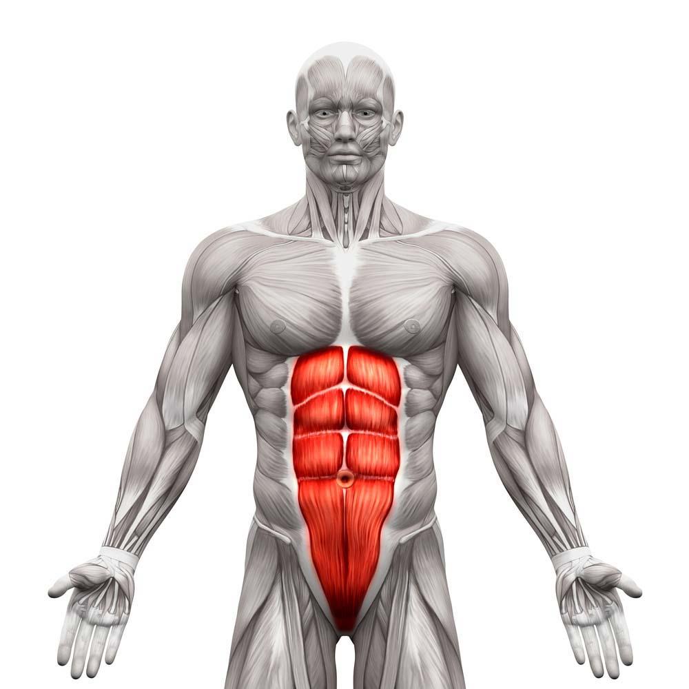 Musculation des abdominaux hommes