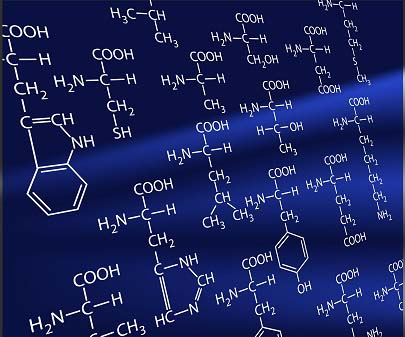 La glutamine est un acide aminé
