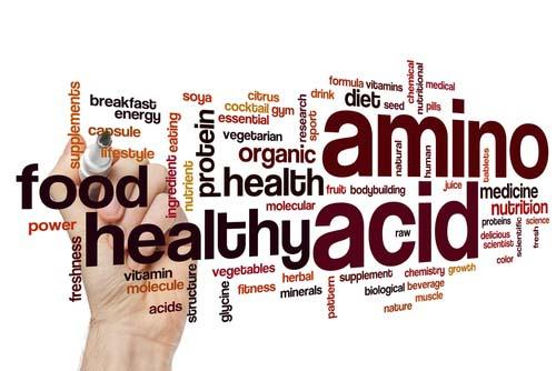 Les acides aminés dans le corps