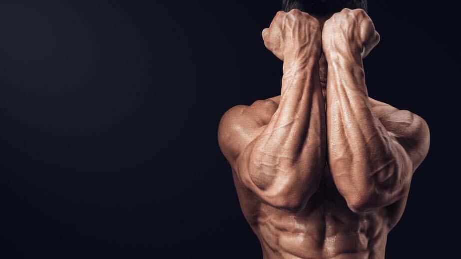Les muscles des avant-bras