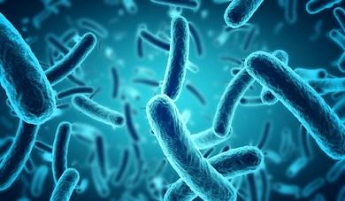 Bétaïne et infections