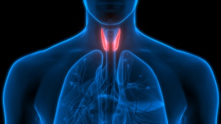 Cortisol et thyroïde