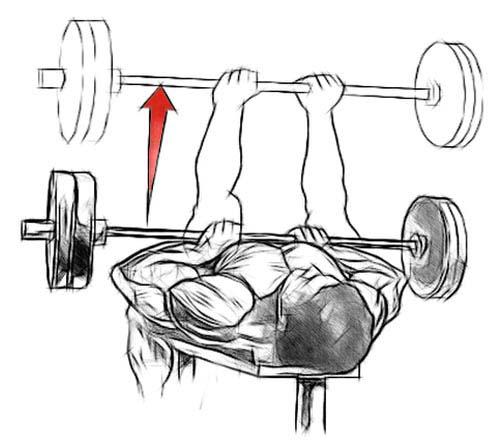 Développé couché prise serrée pour les triceps