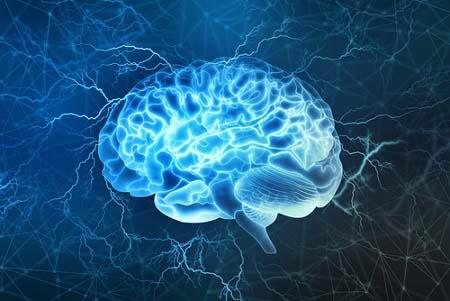 Le cerveau et la récupération musculaire