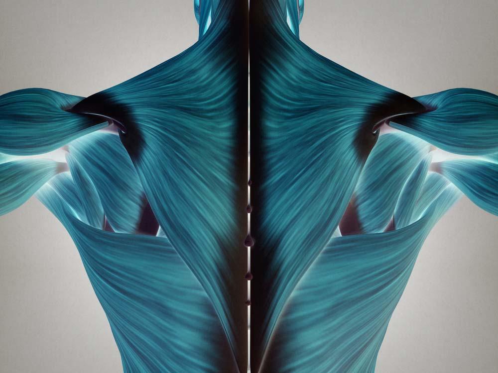 Anatomie dos femme