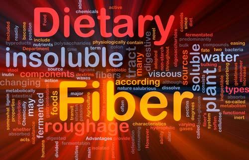 Les fibres et la construction musculaire