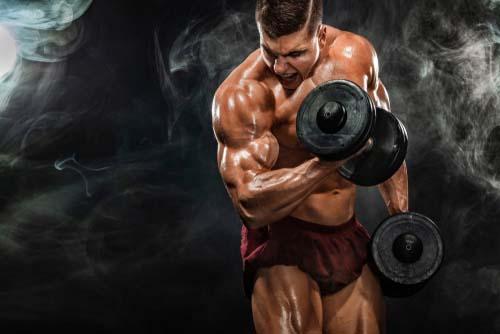 Glucides et masse musculaire