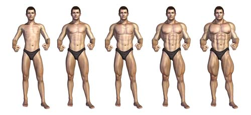 Musculation et hypertrophie