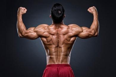 L'insuline et la prise de muscle