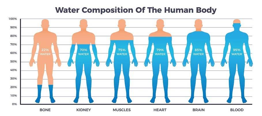 Les rôles de l'eau dans le corps