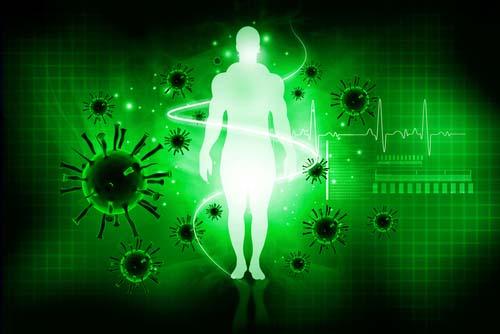 Les fibres renforcent le système immunitaire