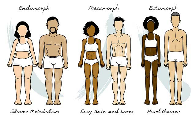 Les morphotypes