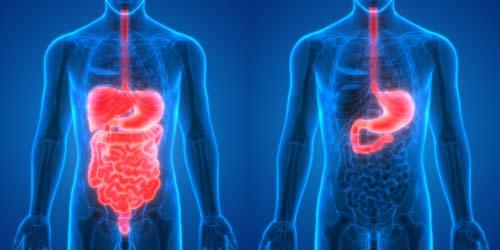 Améliorez votre digestion pour prendre du muscle