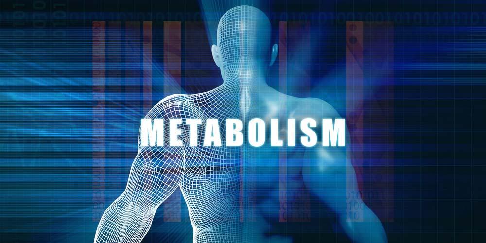 Métabolisme musculation