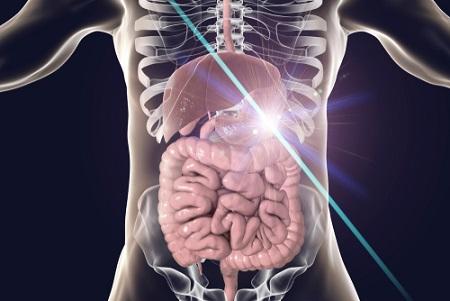 Mélatonine et système digestif