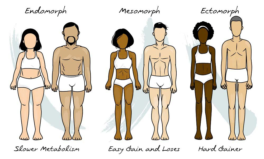 Morphotypes