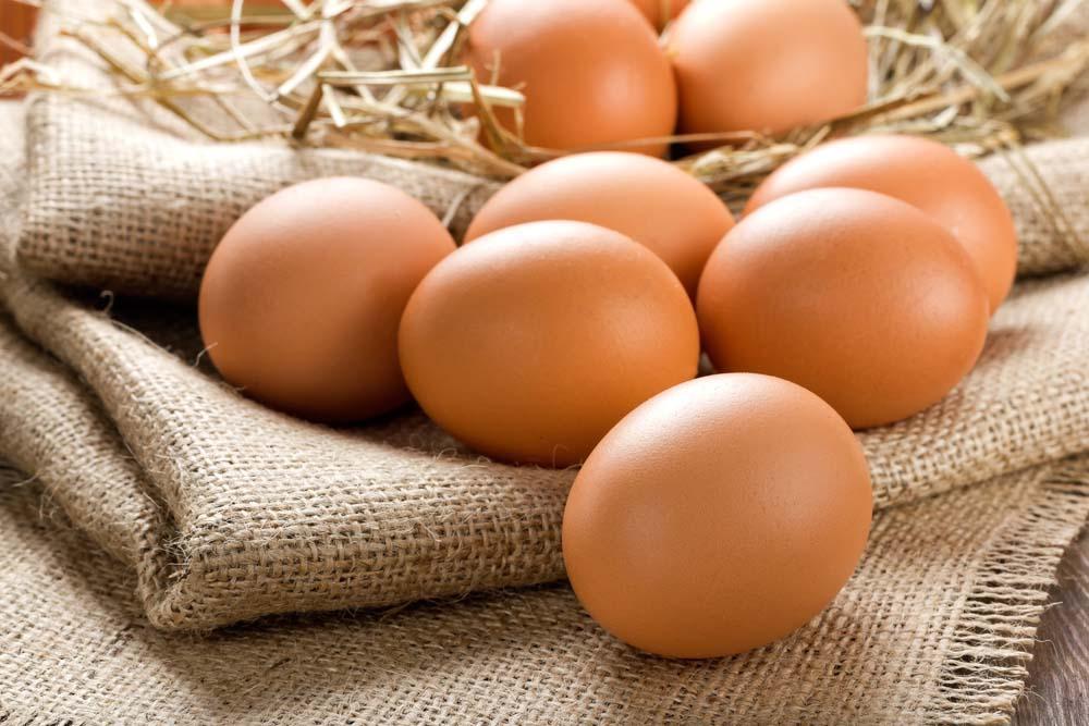 proteines pour la condition physique