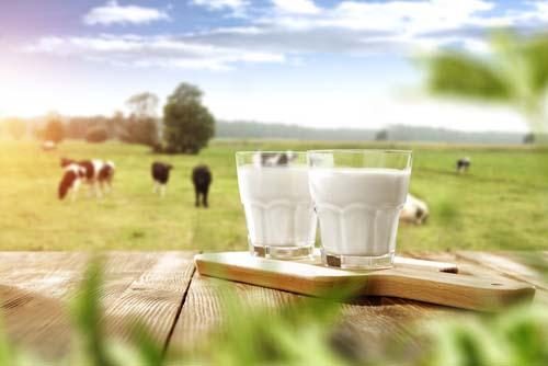 Les allergies aux protéines de lait