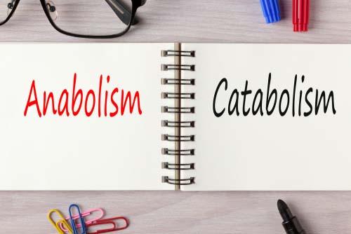 Qu'est-ce que le catabolisme?