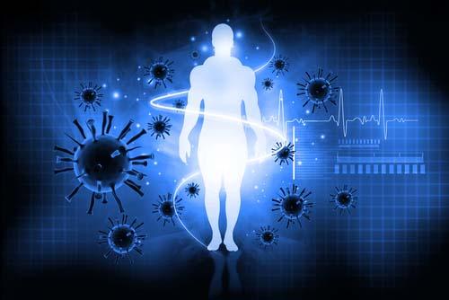 Le rôle de la glutamine dans le corps