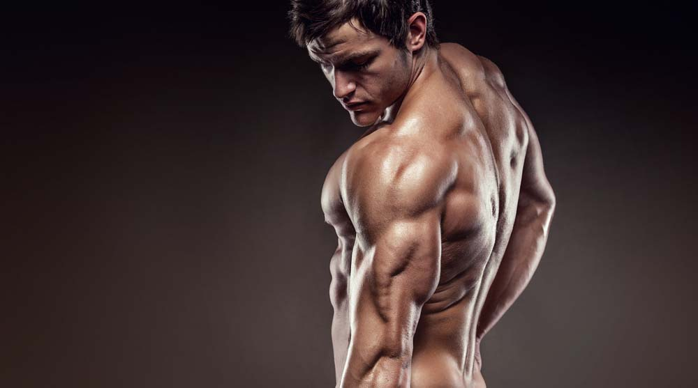 Muscle triceps