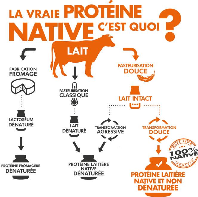 La vraie protéine native, c'est quoi ?
