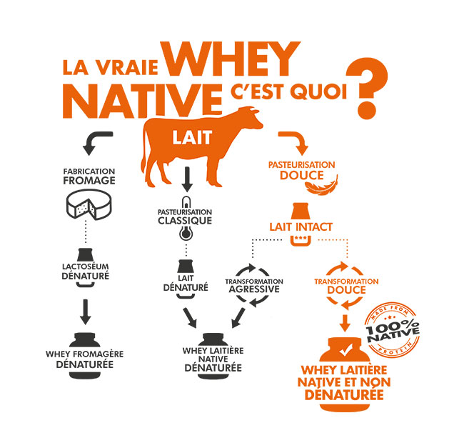 La vraie whey native, c'est quoi ?