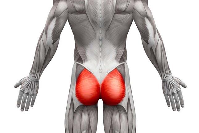 Musculation des fessiers pour les hommes