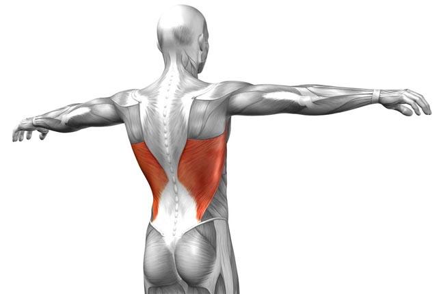 Musculation pour le dos